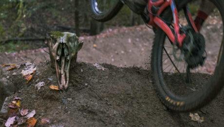 wolf bike park