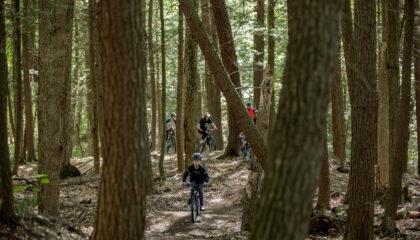 Forêt_montebello